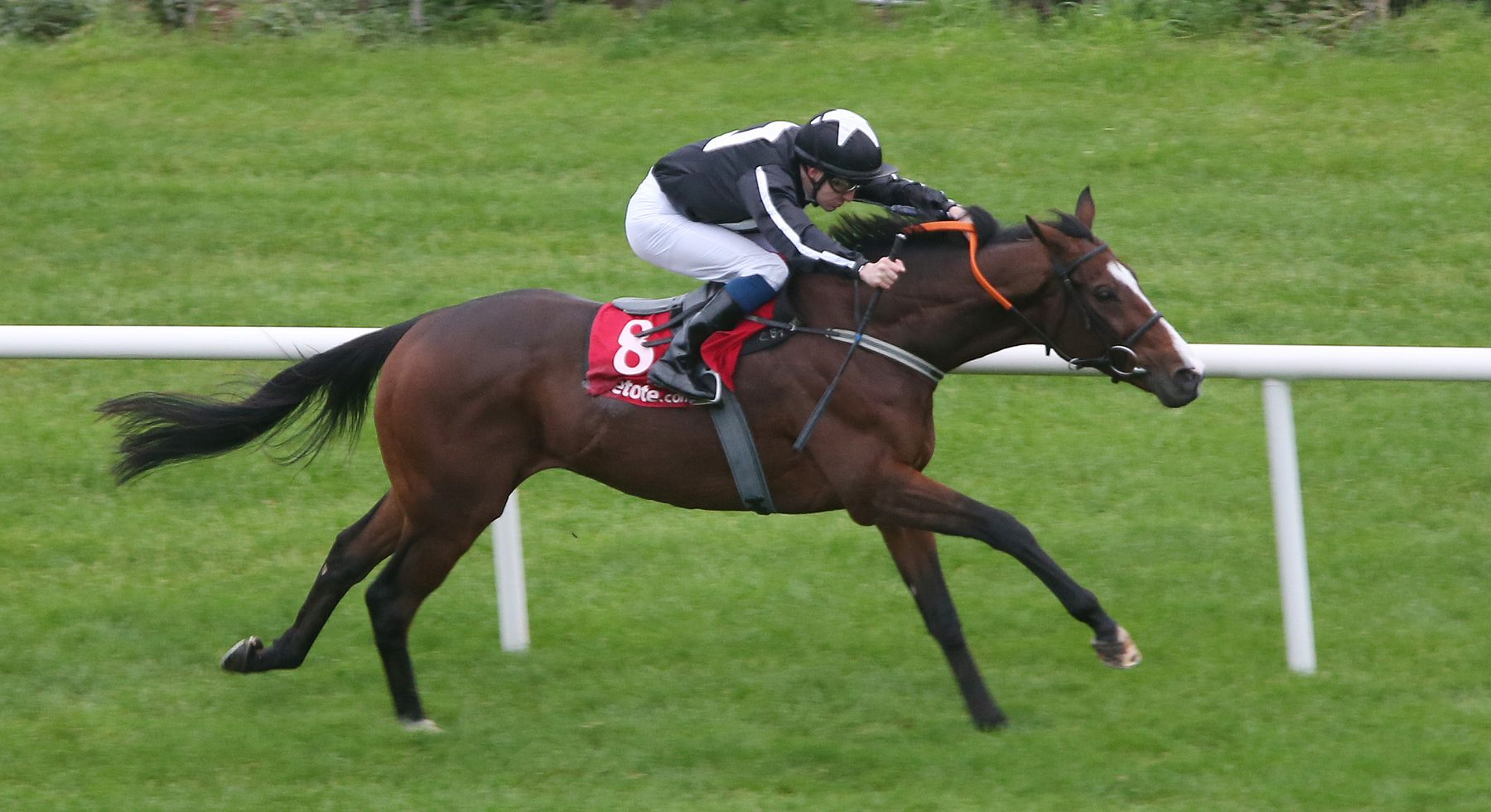 Wonder Laish ridden by Colm O'Donoghue winning The Tote October