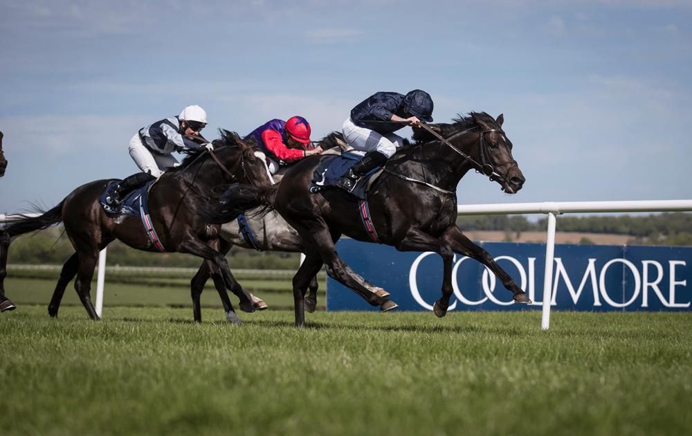 Horses Naas Racecourse