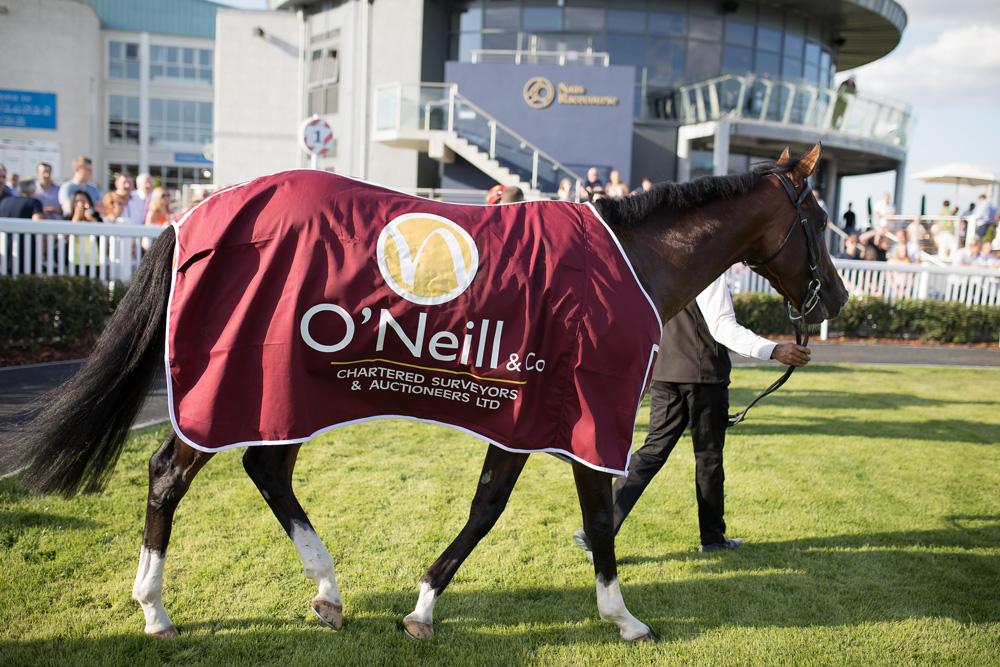 O'Neill & Co Horse